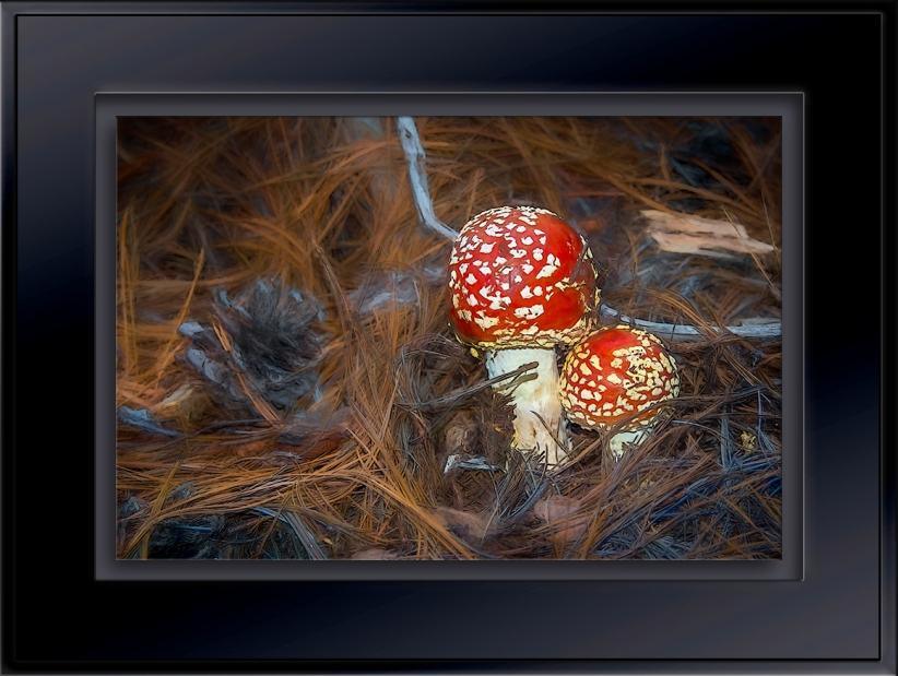 Mushrooms-Edit-blog