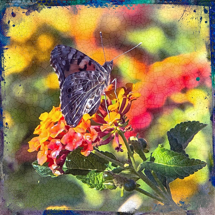 Painted Lady-Edit-1-art-blog
