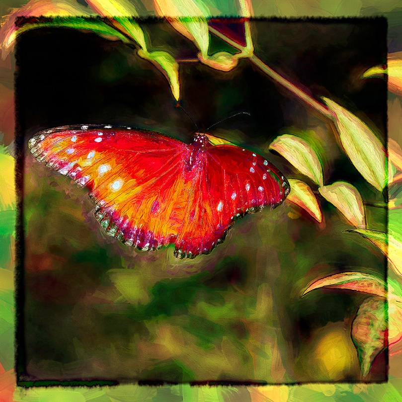 Queen Butterfly-Edit-1-art-blog