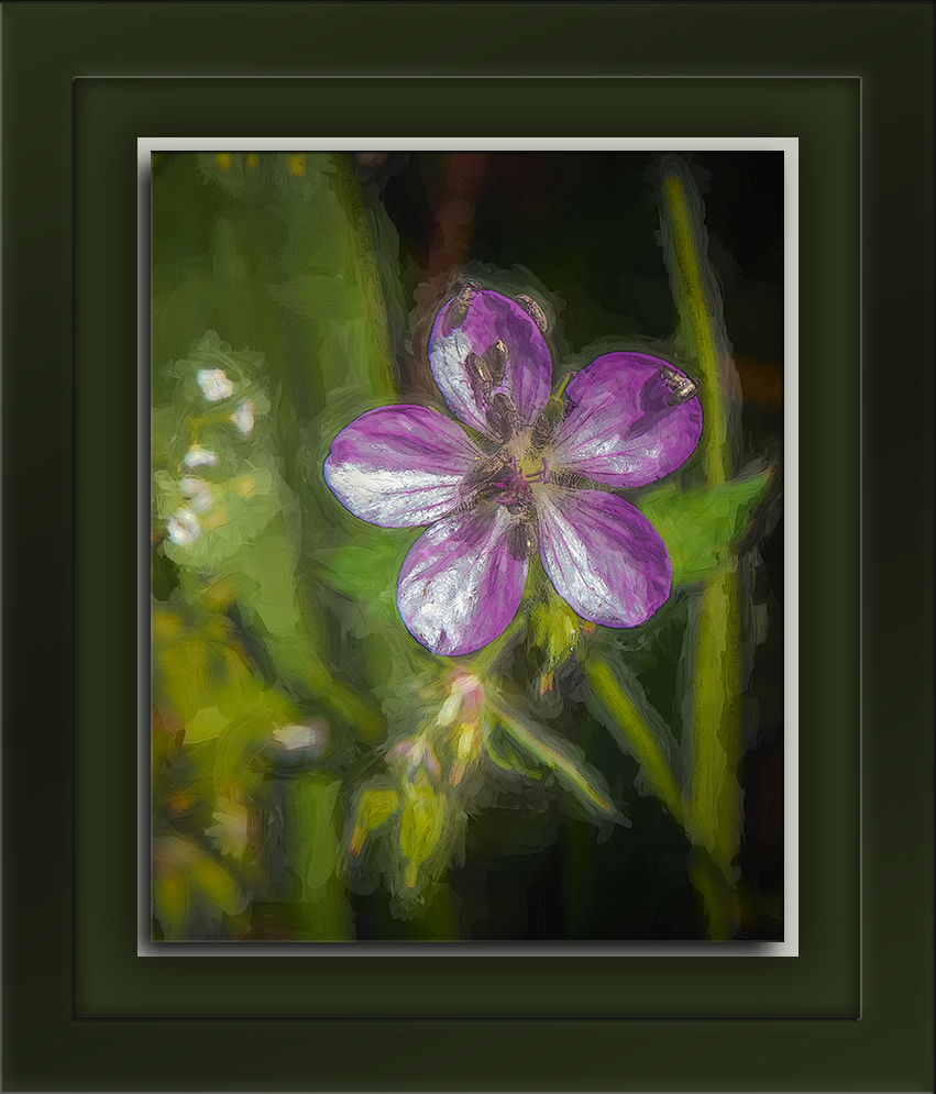 Richardson's Geranium-Art-blog.jpg