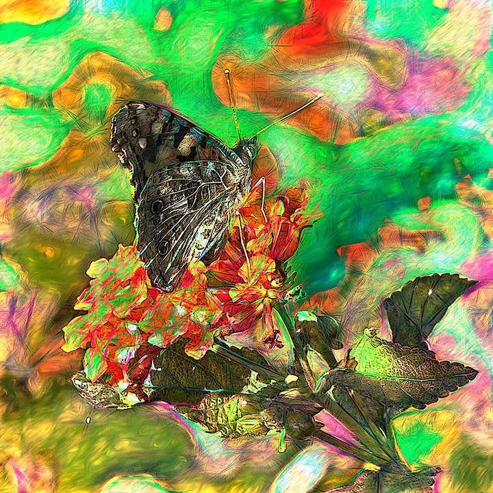 Southeast Arizona Butterfly-art-blog