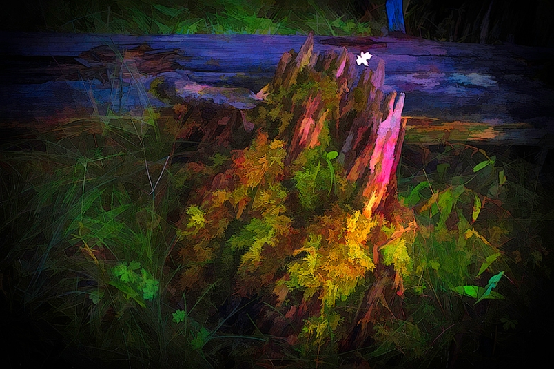 Tree Stomp-Edit-2-art-blog
