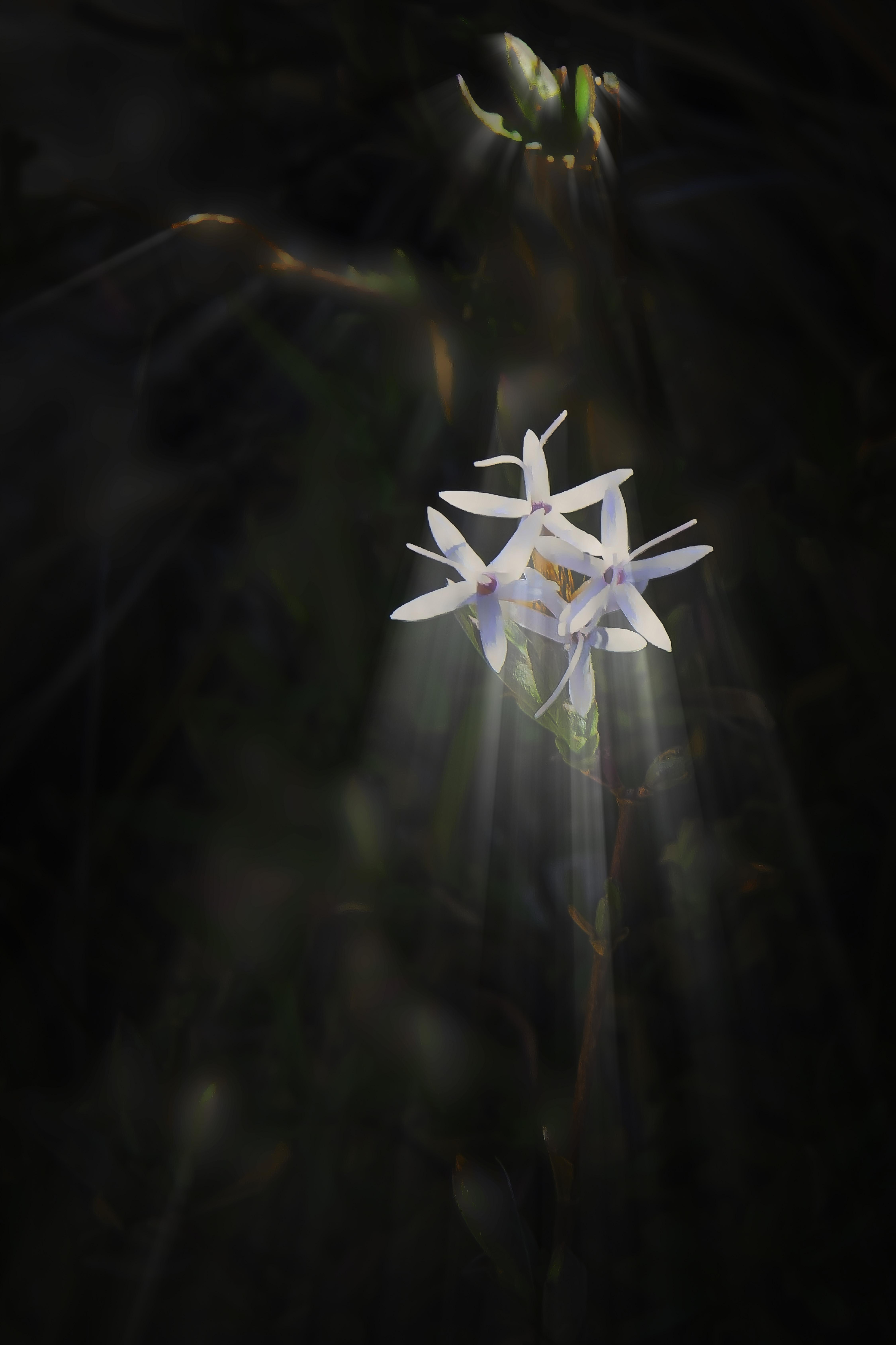 WILDFLOWER ART-2-blog
