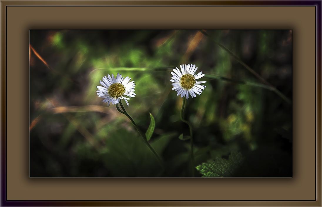 Arizona Fleabane-Edit-1-blog