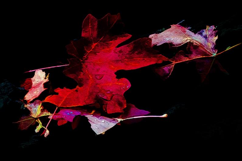 fall-leaves-art-blog