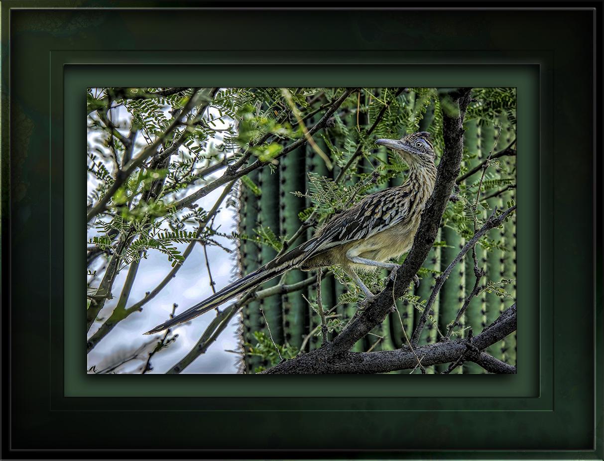 Roadrunner In Tree-Edit-1-blog
