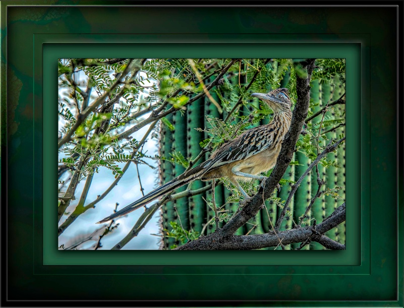 Roadrunner In Tree-Edit-1-blog