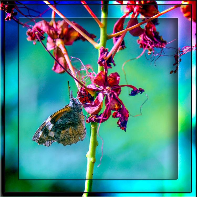 Skipper Butterfly-Edit-1-blog