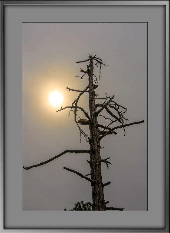 Tree Top-Edit-1-blog