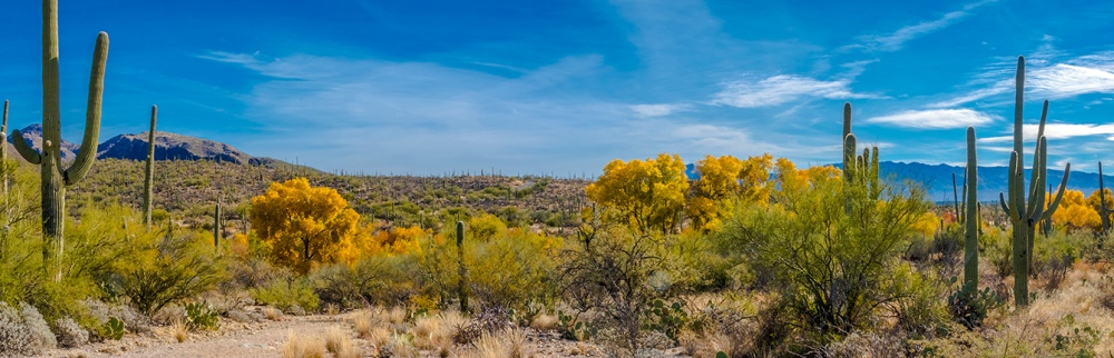 Sabino Canyon Fall Colors Panorama--2-blog