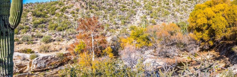 Sabino Canyon Fall Colors Panorama--3 blog