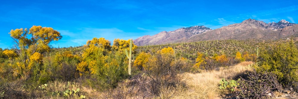 Sabino Canyon Fall Colors Panorama- blog