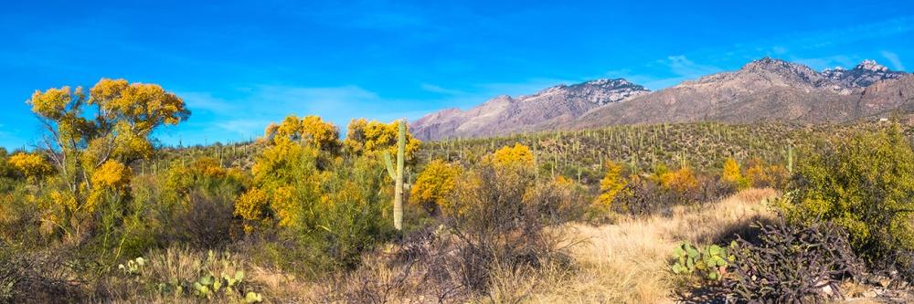 Sabino Canyon Fall Colors Panorama- blog