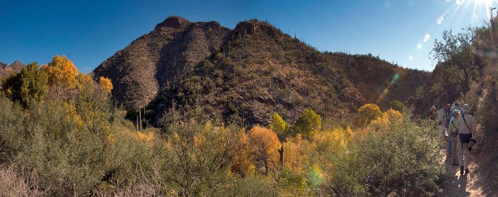 Sabino Canyon Fall Colors -Panorama2 blog