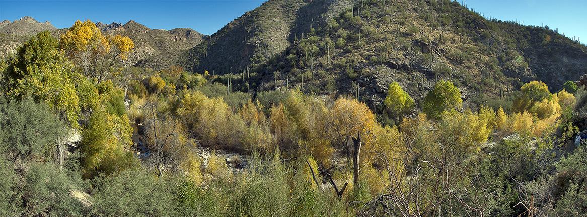 Sabino Canyon Fall Colors_Panorama1 blog