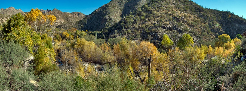 Sabino Canyon Fall Colors_Panorama1 blog