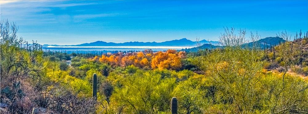 Sabino Canyon January colors-0845 Panorama blog-2