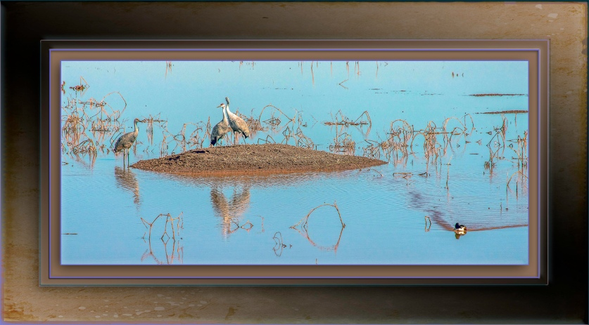 Sandhill Cranes at Whitewater Draw-Edit-2-blog