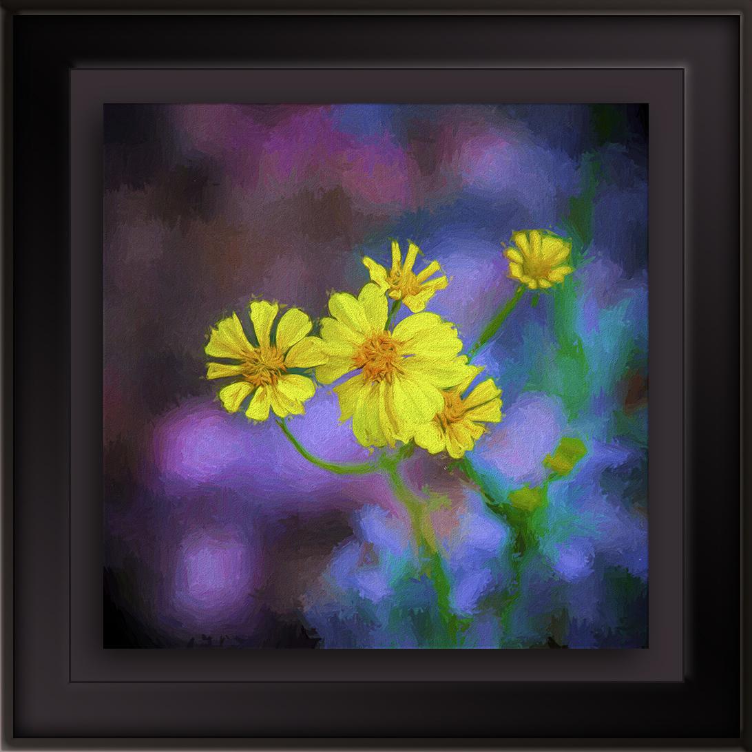 Brittlebush Blossoms-Edit-1-painting blog