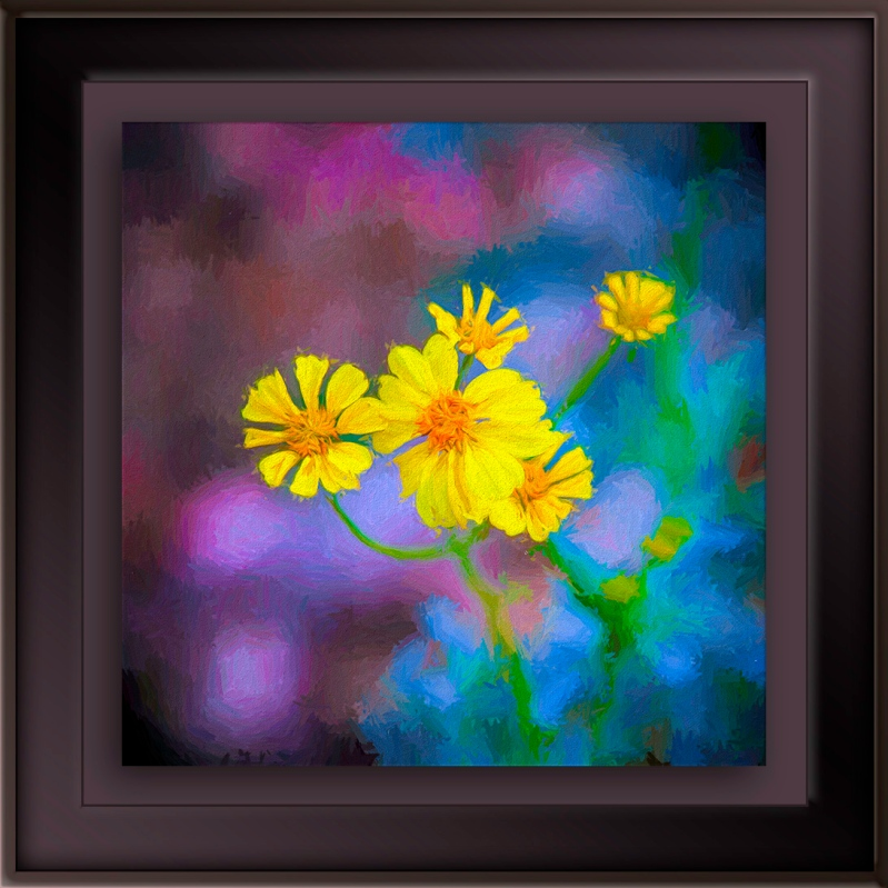 Brittlebush Blossoms-Edit-1-painting blog