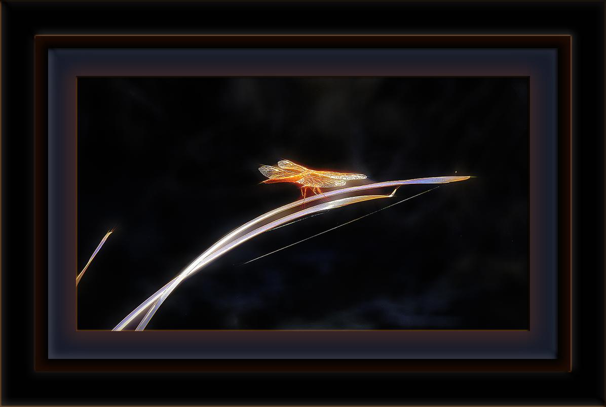 Dragonfly-1-Edit-1-blog