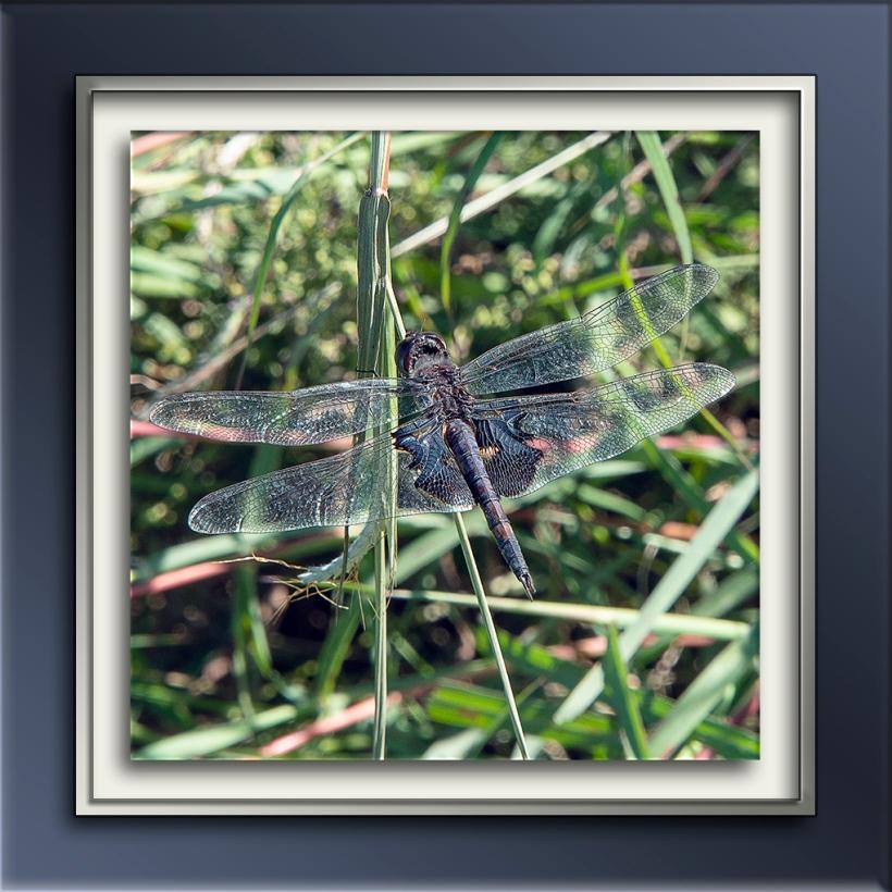 Dragonfly Black Saddlebags-blog.jpg