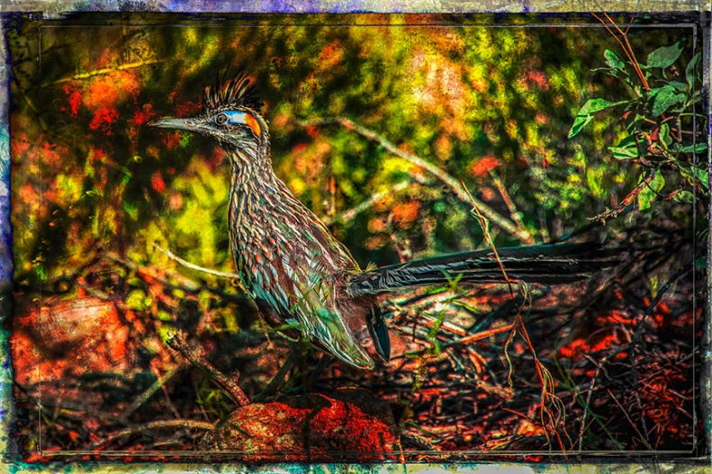 Greater Roadrunner-art-blog