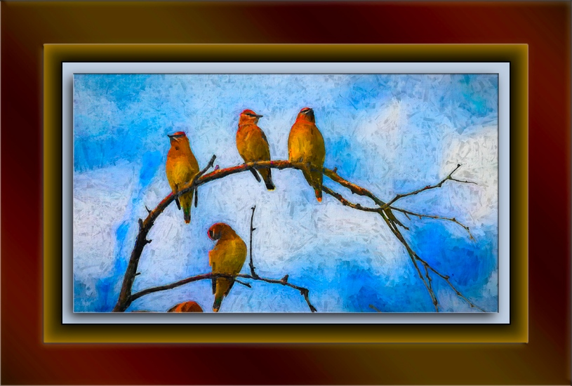 cedar waxwing-9-edit-4-art-72
