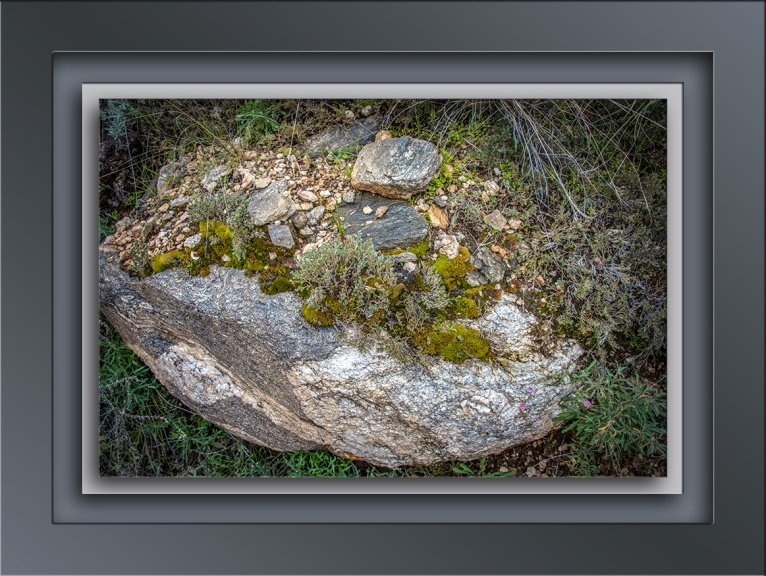 life on a gneiss rock-72