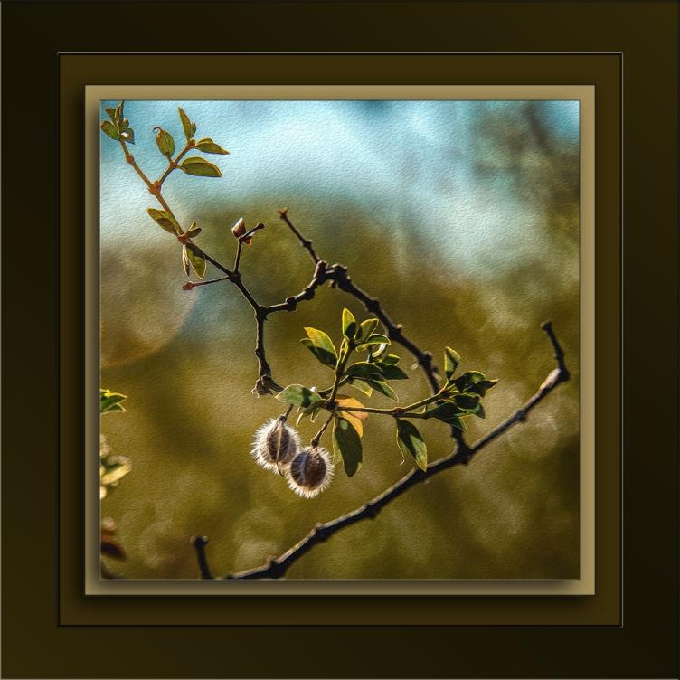 plantseeds-2-72