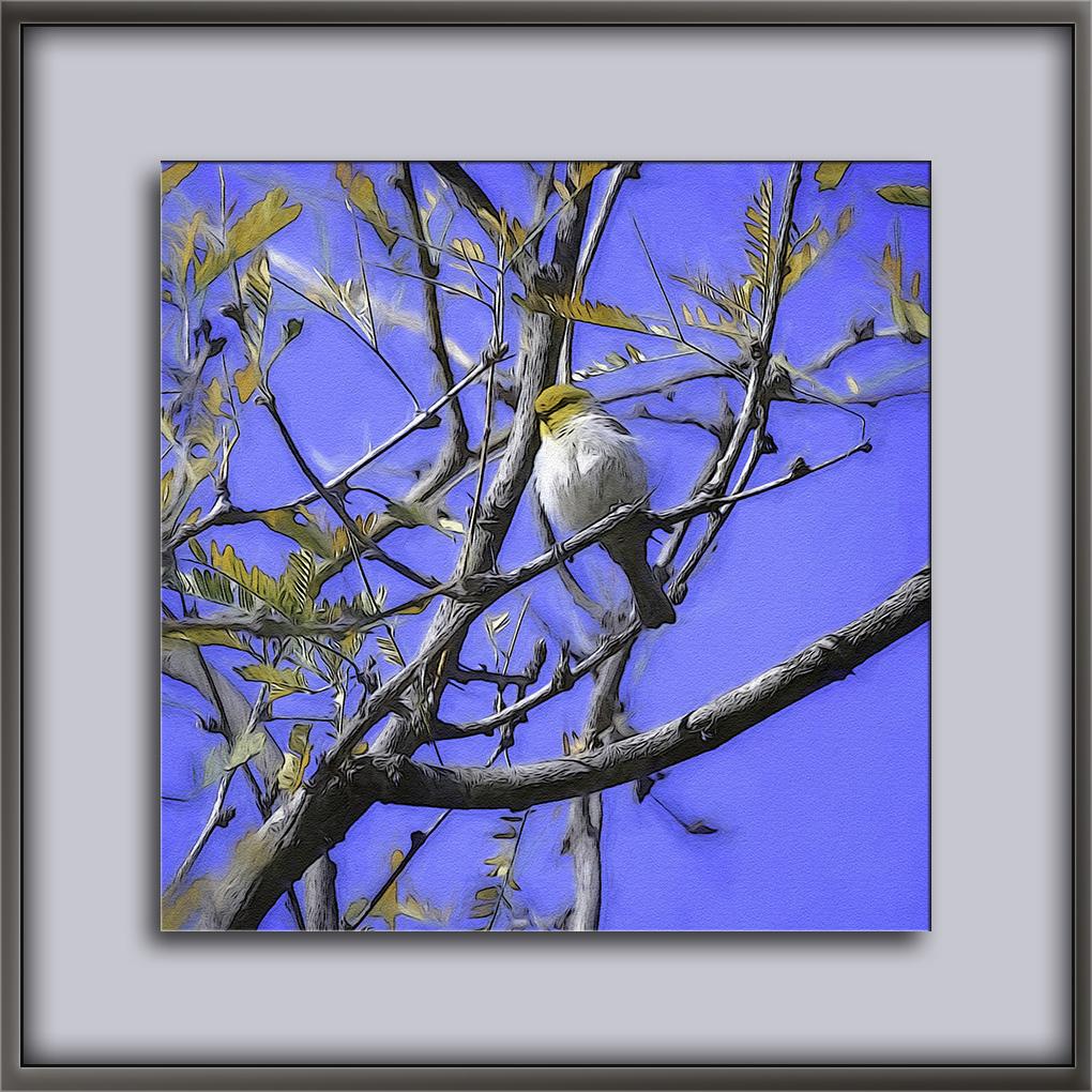 Verdin in Sabino Canyon-Edit-1-art-72.jpg