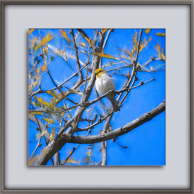 Verdin in Sabino Canyon-Edit-1-art-72.jpg