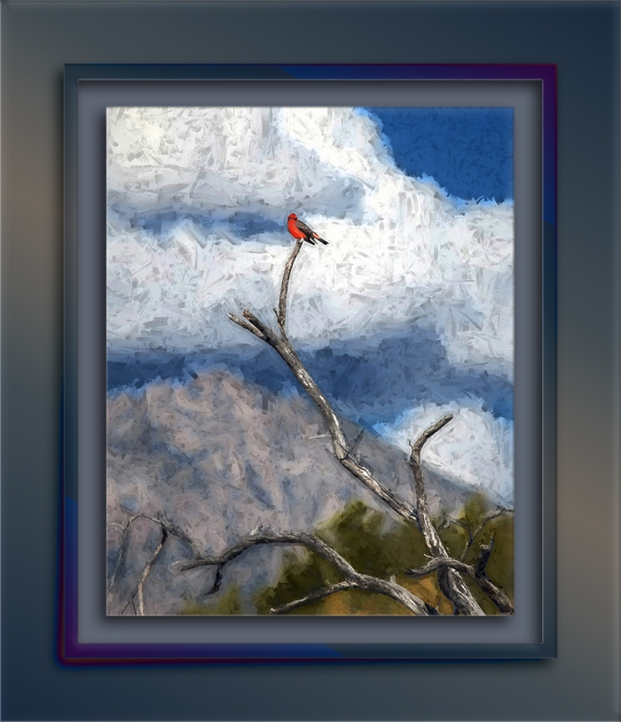 vermilion flycatcher-2-art-72