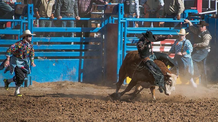 Bull Riding-0386-2 blog