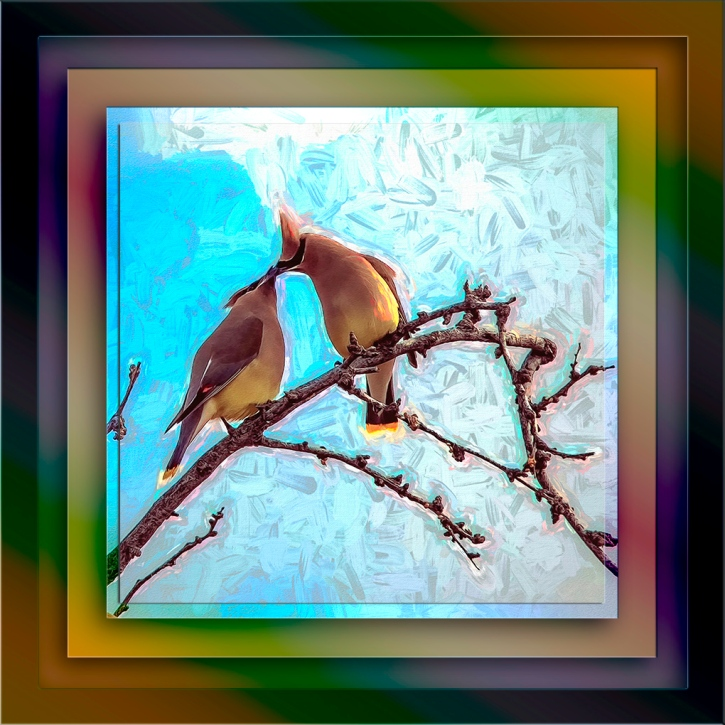 Cedar Waxwing Lovers-Edit-2-art-II-72
