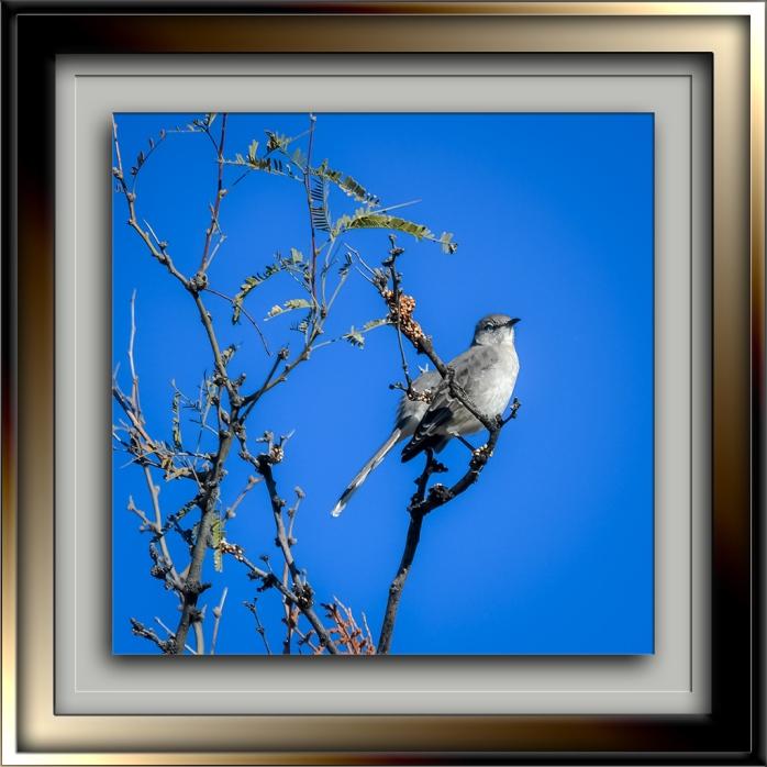 Mockingbird--72.jpg