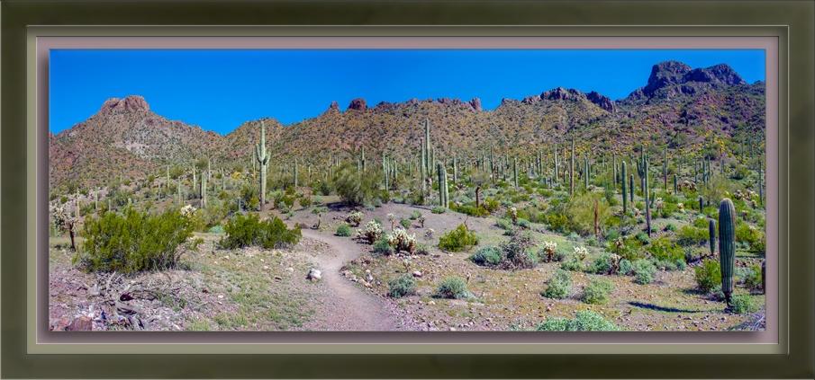 Picacho Peak State Park-72