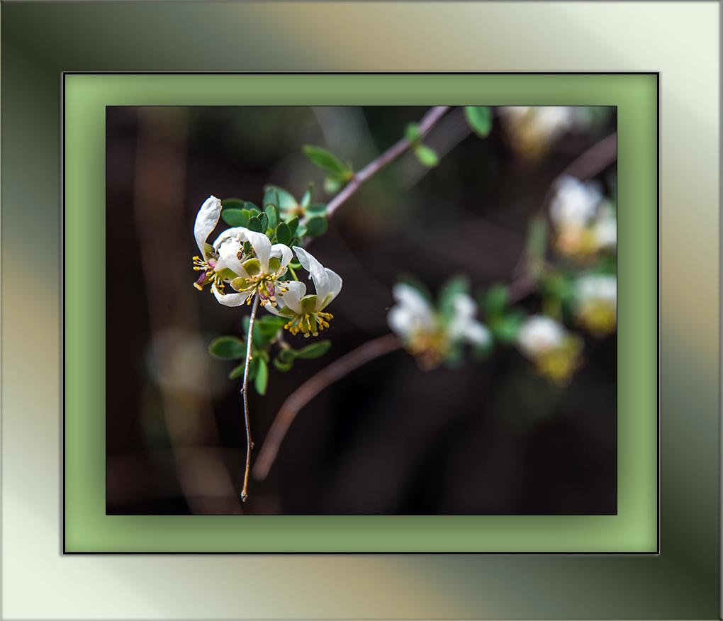 Ragged Rock Flower (1 of 1)-2 blog