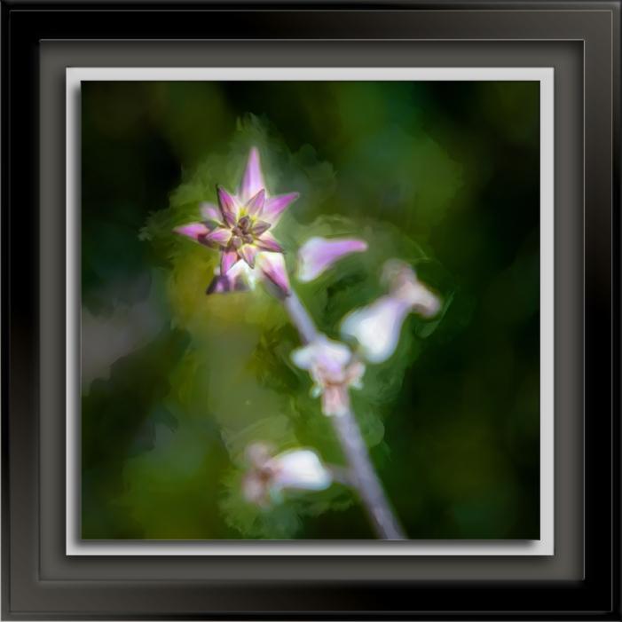 Jewelflower-2-art-72