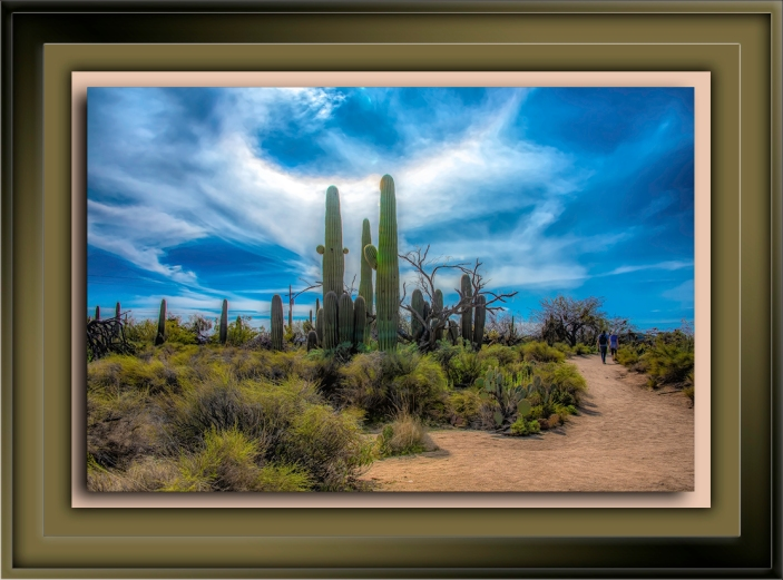 Saguaro Cactus-Edit-4-72-2
