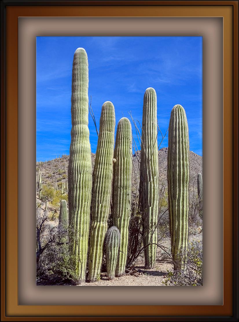 Saguaro Family-72