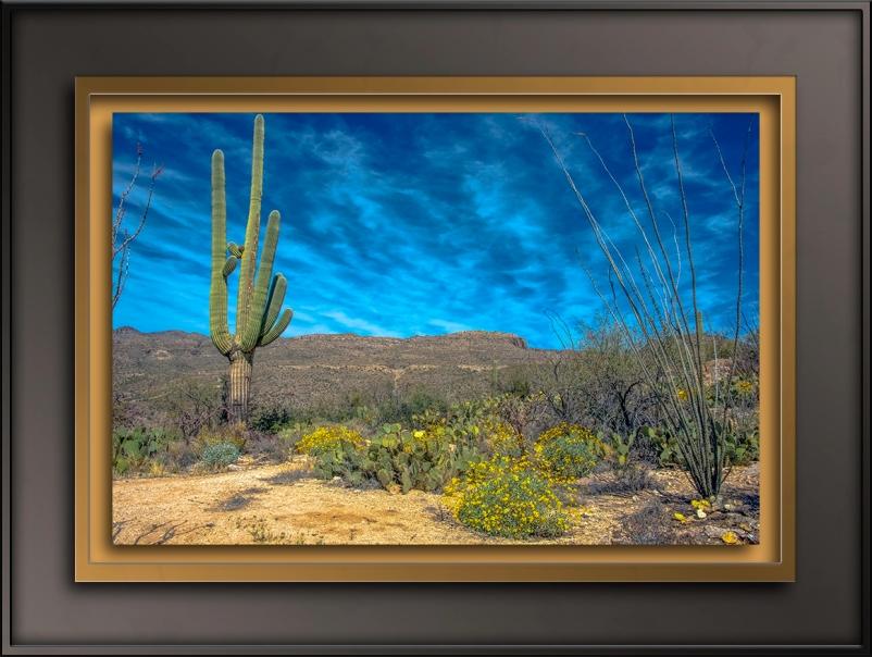 Sonoran Spring-0743-72
