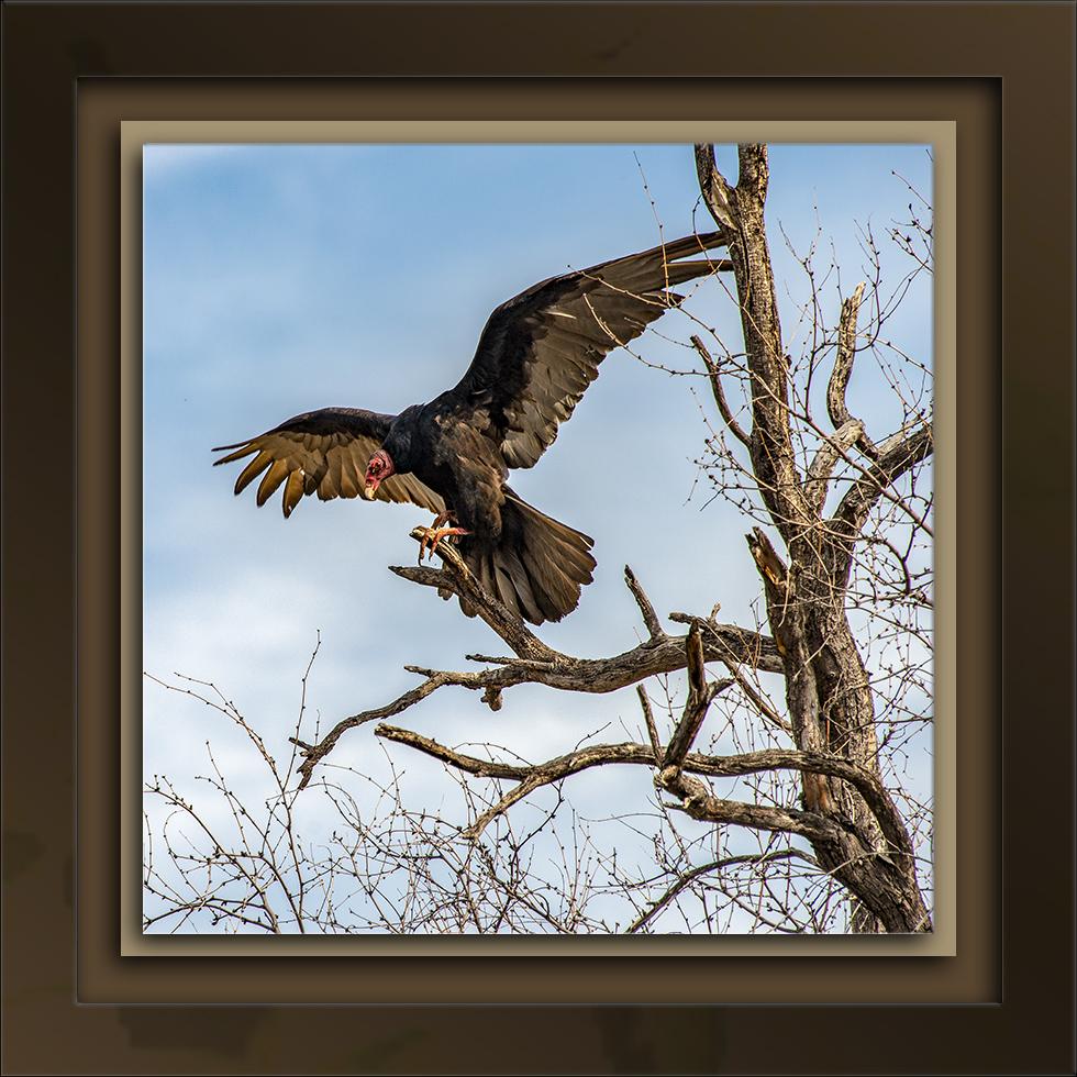 Turket Vultures Liftoff-72