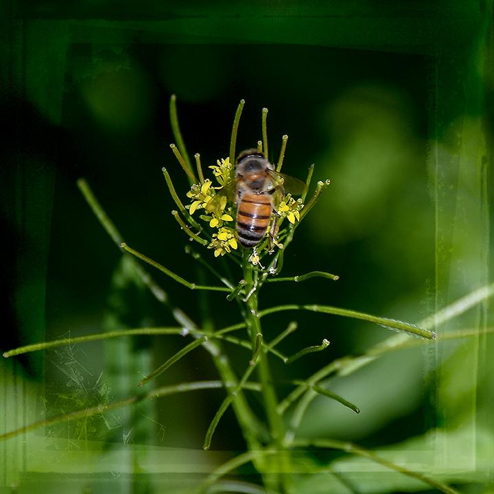 Bee On London Rocket-3-72