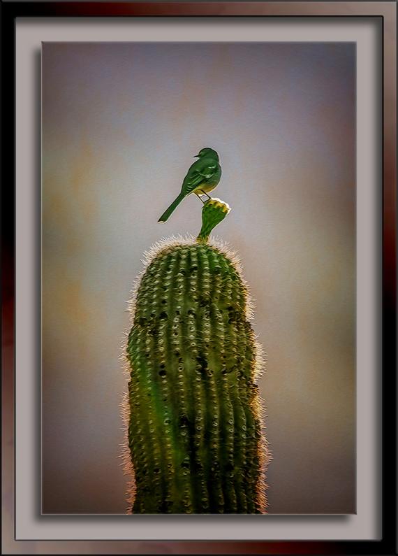 Mockingbird on Saguaro-art-2-72