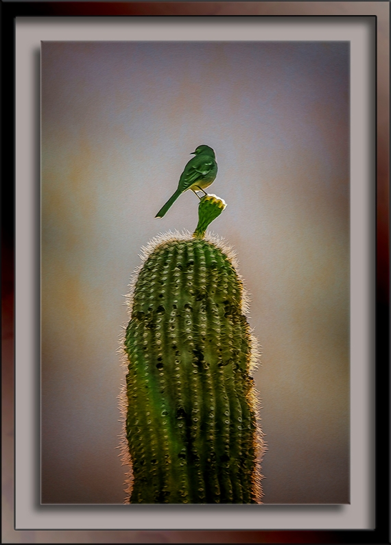 Mockingbird on Saguaro-art-2-72