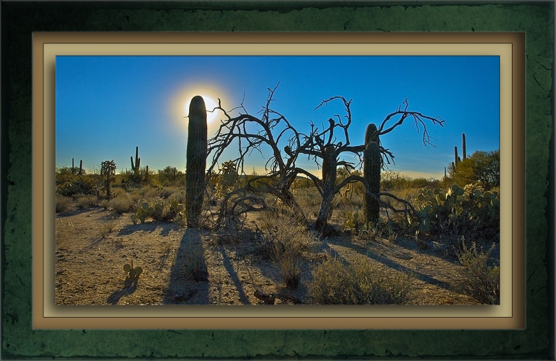 Morning In The Desert-72.jpg