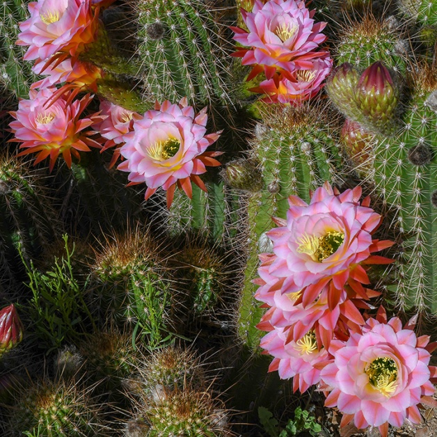 Spring Flowers-3013-4-72