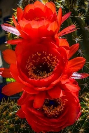 Spring Flowers-3022-72