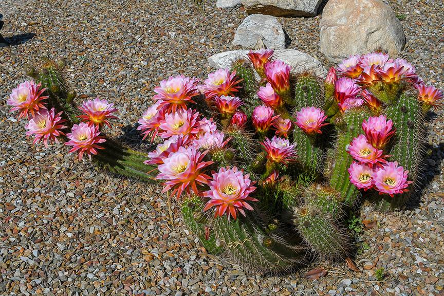 Spring Flowers-3026-72
